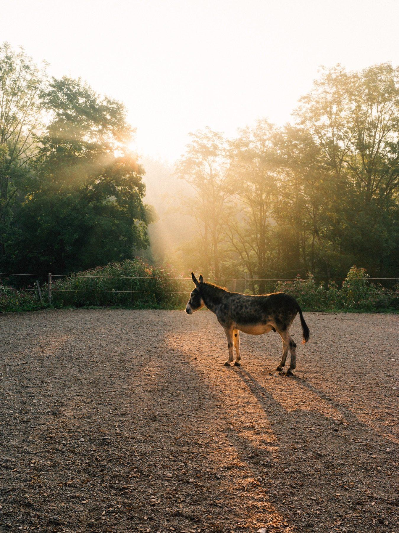 Eselwanderung_Mariazell_für_Bergwelten_fotografiert_von_Julius_Hirtzberger-136