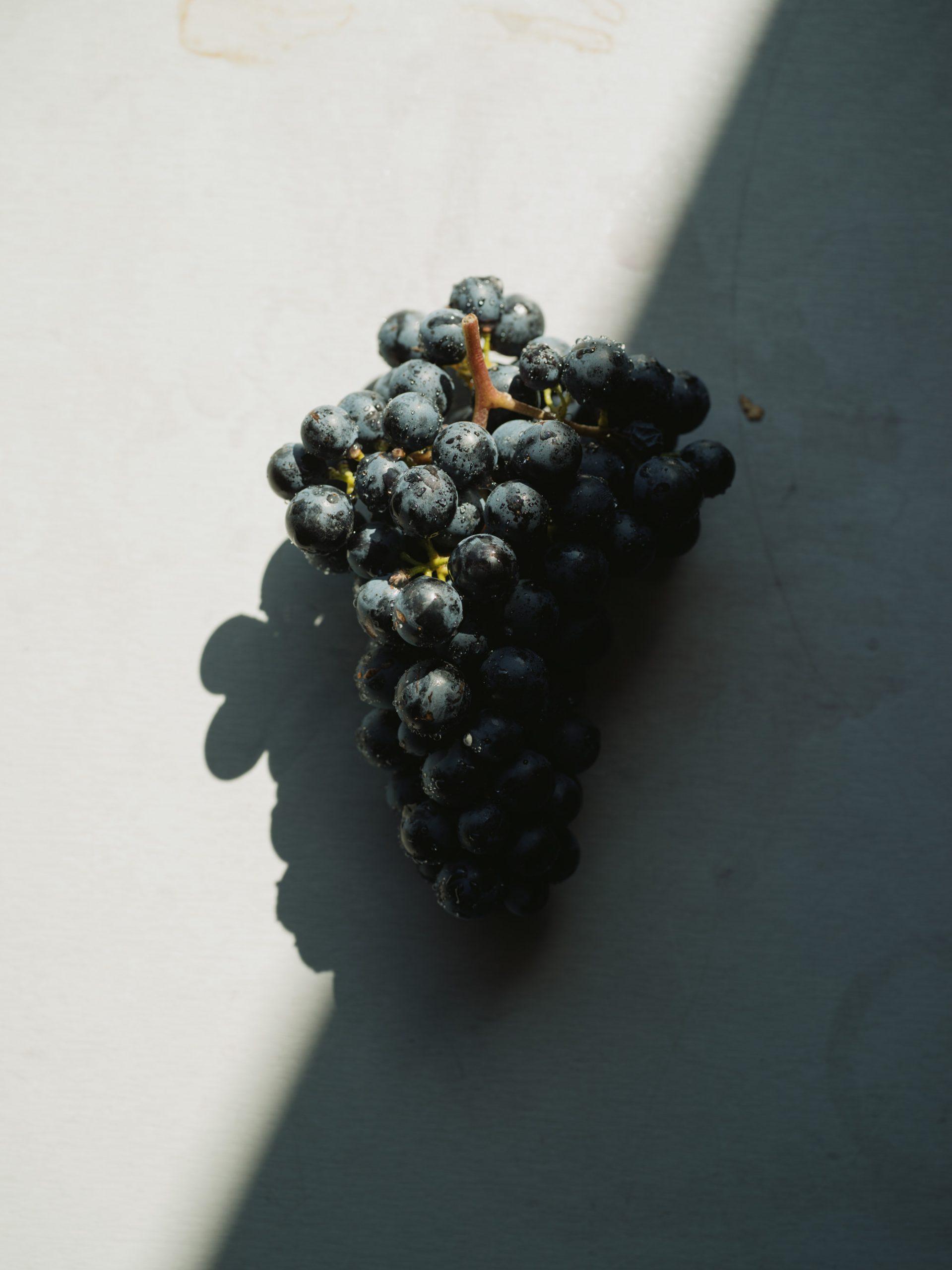 Weingut Netzl